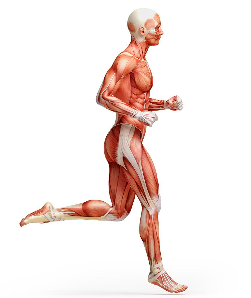 <span>1.</span>ランニングとトレーニングの筋肉の違い